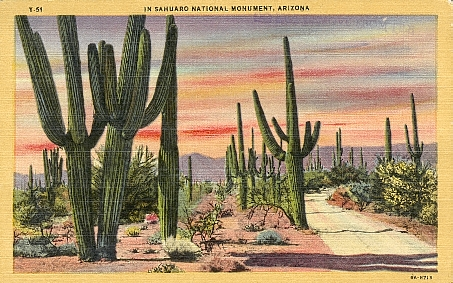 Site displays a collection of vintage postcards of Saguaro National Park in Arizona.